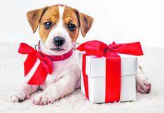 ¿Regalar un perrito a mi hijo por Navidad es buena idea?